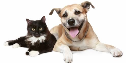 571121943044bddabcfc1663f0d358926e55dc15 - Identificação e o controle populacional de cães e gatos